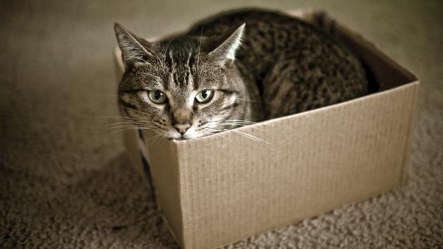 Кот в коробке.