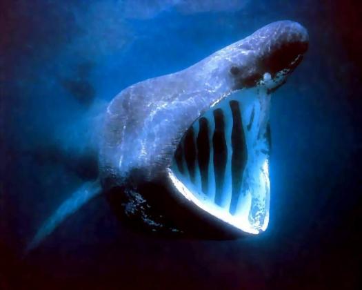 Чудо-юдо рыба кит.