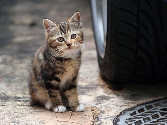 Уличный котенок.