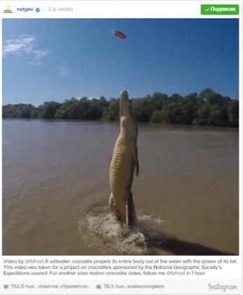 National Geographic показал видео летающего крокодила