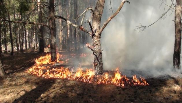 В Тарасовском районе горит лес: фото 61.mchs.gov.ru