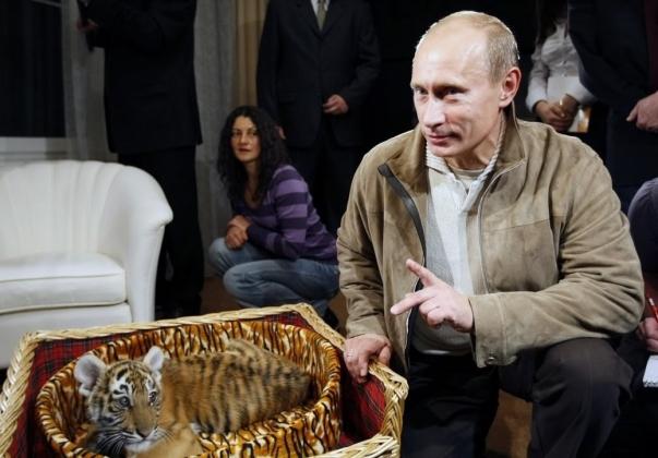 Владимир Путин и тигр.