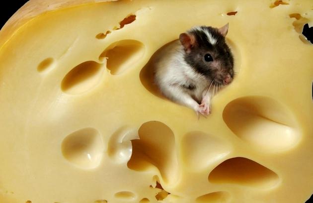 Сыр и мышь