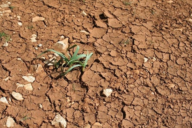 В Ингушетии сев озимых задерживается, земледельцы ждут дождей