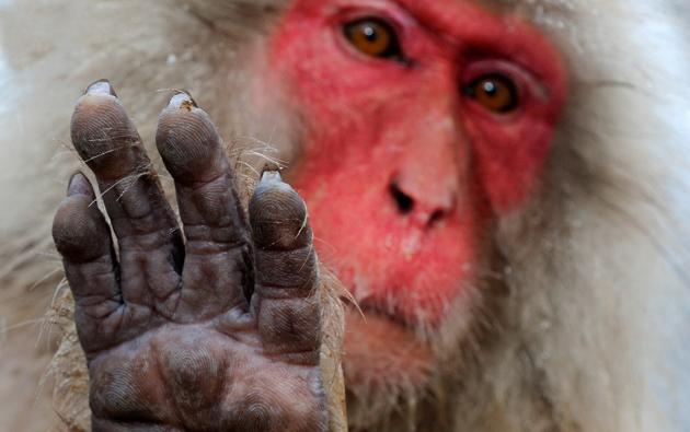 Андрей Ганжа  - Выход «мудрой обезьяны»: Китай в ООН - ИА REGNUM
