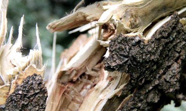 Сломанное дерево.