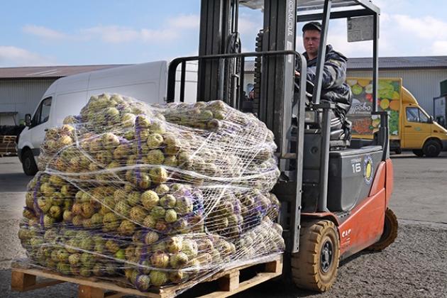 Калининградская агрофабрика приняла у населения 80 тонн яблок. Фото: gov39.ru.