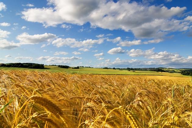 На Кубани увеличилось число прибыльных сельхозорганизаций.