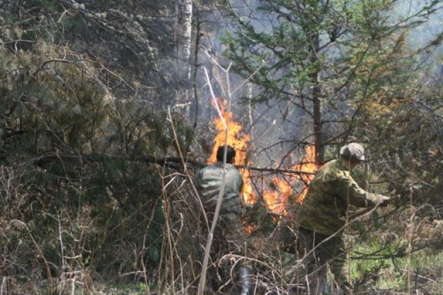 Лесные пожары в Хакасии. Фото: r-19.ru