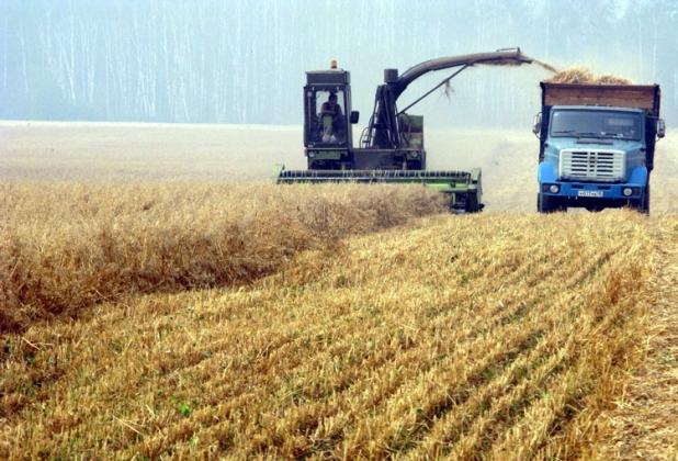 Алтайский край соберет более 3,7 млн тонн зерна