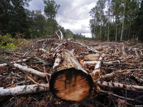 «Кто в лесу хозяин?» В России уничтожена система лесоустройства