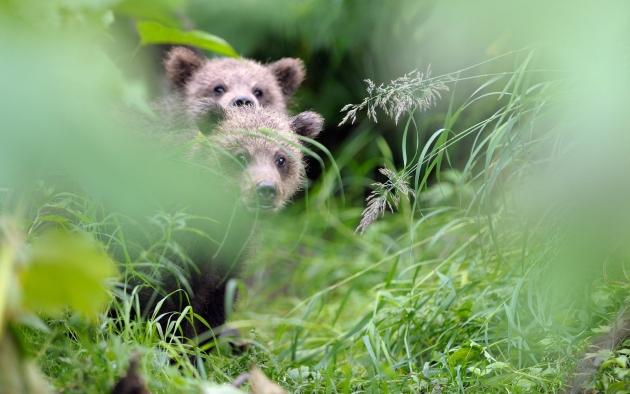 Завершен первый этап съёмок фильма «Медведи Камчатки. Начало жизни»