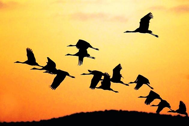 Чиновники должны летать за границу через нацперевозчиков.