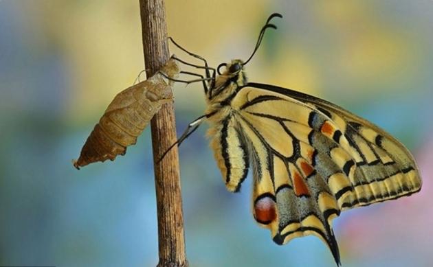 Рождение бабочки.