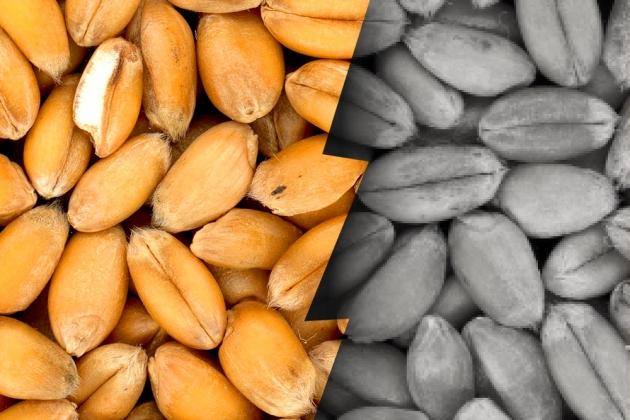 Декрет № 3: отделить зерна от плевел