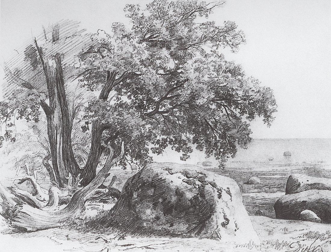 Иван Шишкин. Дуб на берегу Финского залива. 1857