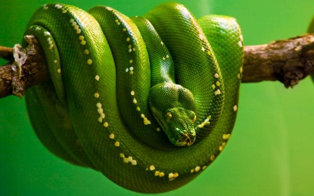 Одна из змей