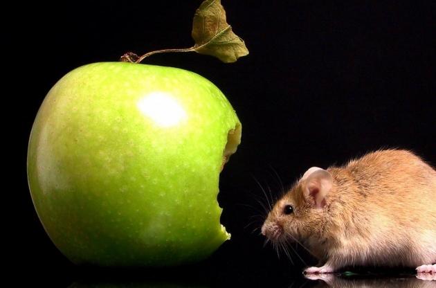 Взлом по ордеру: Apple перед судом антитеррора