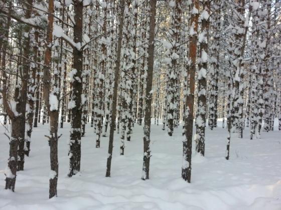 Коренные малочисленные народы Севера: реестр несуразностей