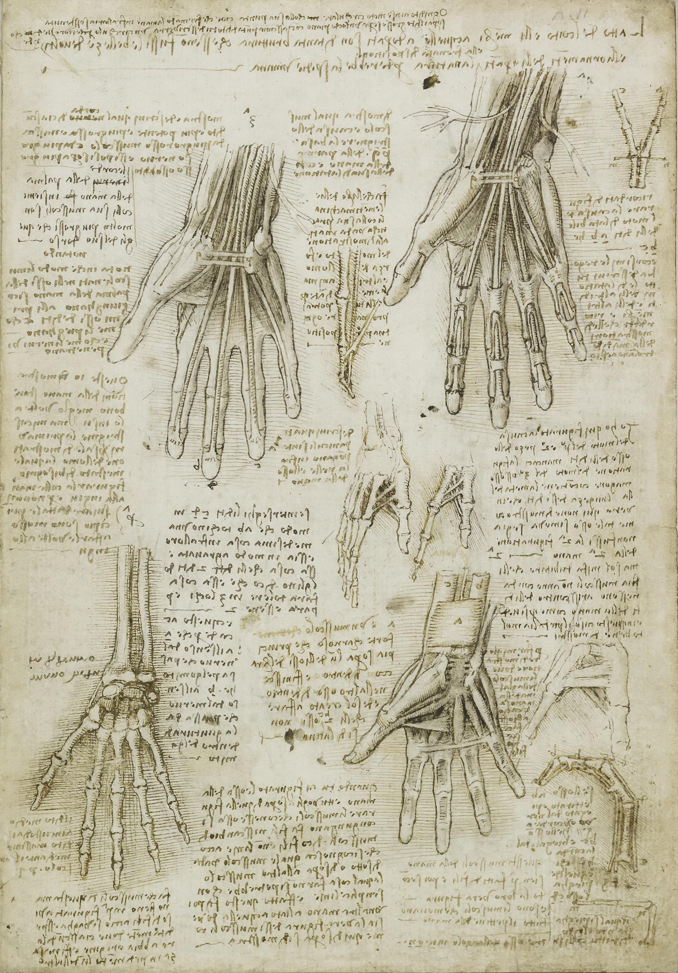 understanding the man leonardo da vinci and his scientific observations