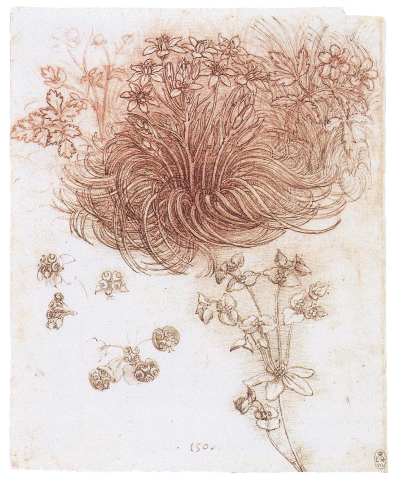 Леонардо да винчи цветы, цветов