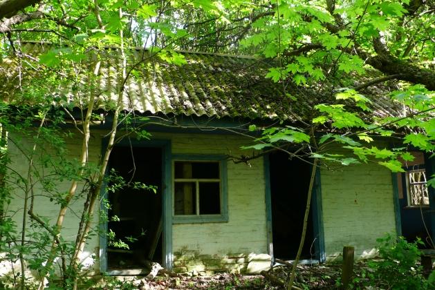 На Украине официально создан Чернобыльский биосферный заповедник