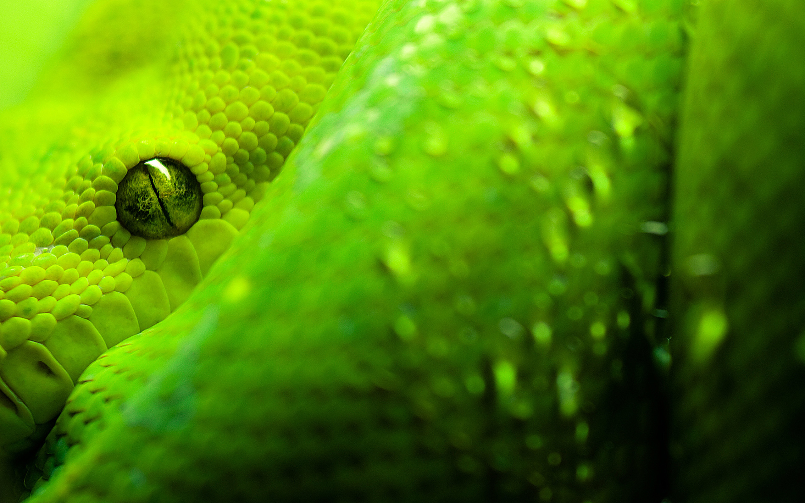 змея ультрафиолет загрузить