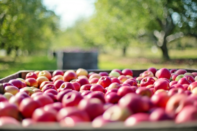 Россельхознадзор не исключил запрета реэкспорта овощей и фруктов через ЕС