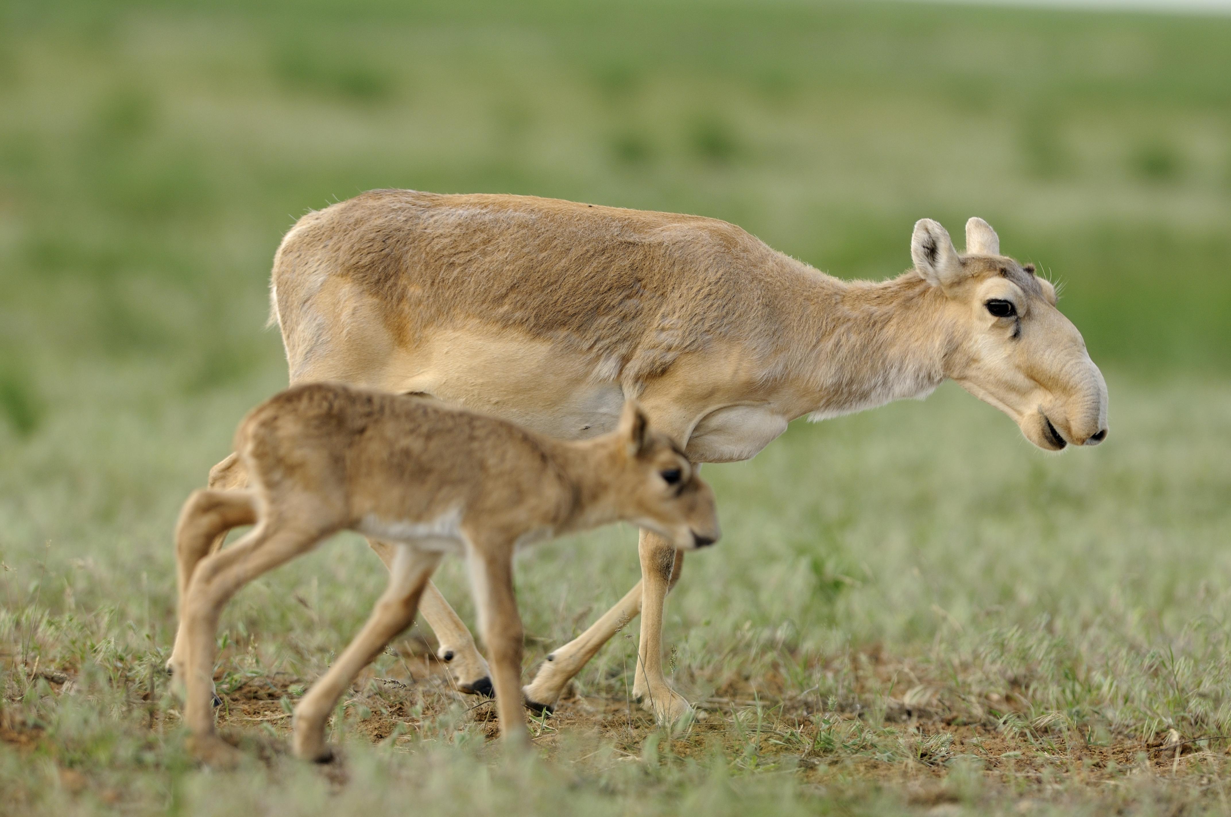 Картинки животных казахстана для детей