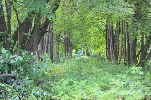 В новгородском имении Рахманинова начали расчищать усадебный парк
