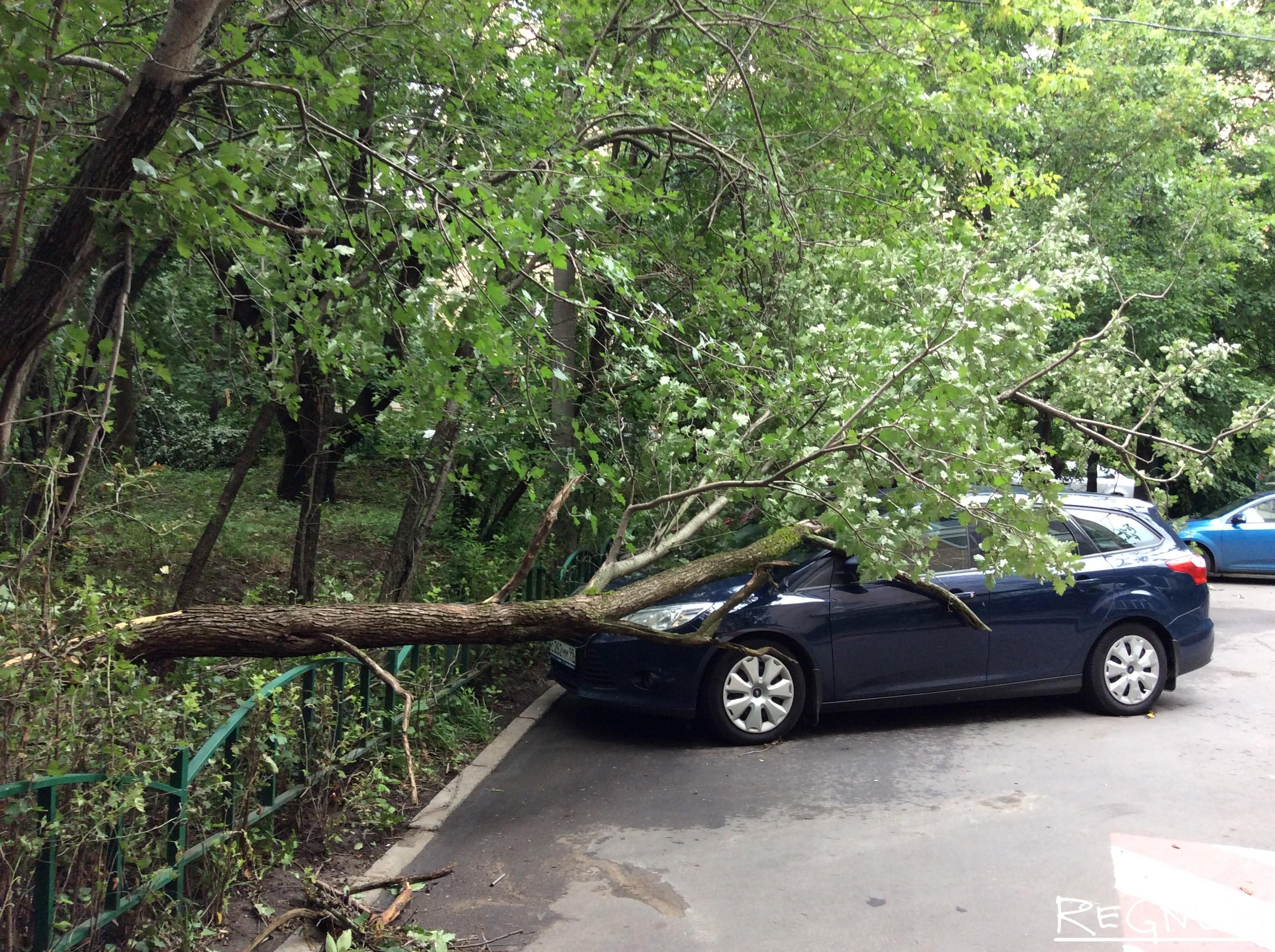 Автомобиль под поваленным ураганом деревом