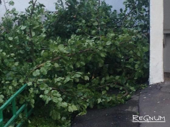 Ураган в Омске: проводится доследственная проверка