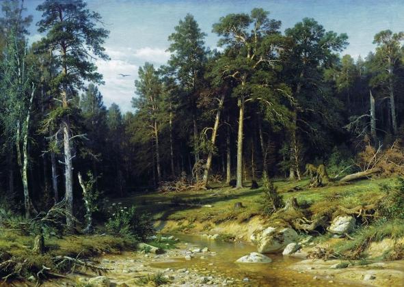 В Воронежской области браконьеры уничтожили лес на 38 млн рублей