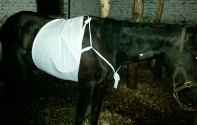 Месть за вытоптанный огород: барнаулец расстрелял соседскую лошадь