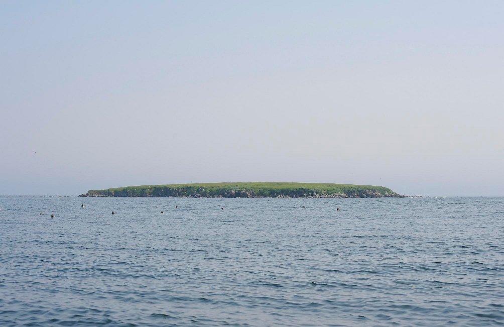 Нерпы, остров Токи