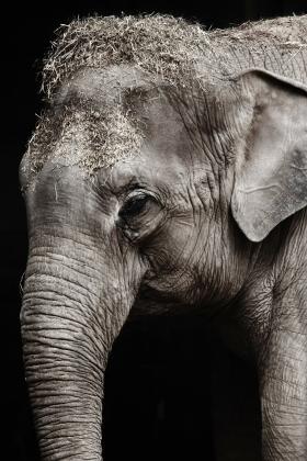 Героин с транквилизатором для слонов — «новая дрянь» на улицах США