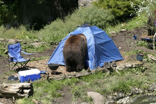 фото задрал медведь