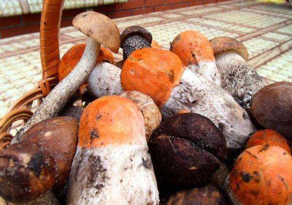 Родители главы ЛНР отравились грибами в Воронежской области