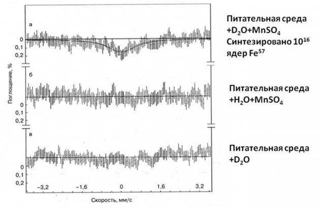Процесс преобразования марганца в железо-57 в синтрофной ассоциации микроорганизмов