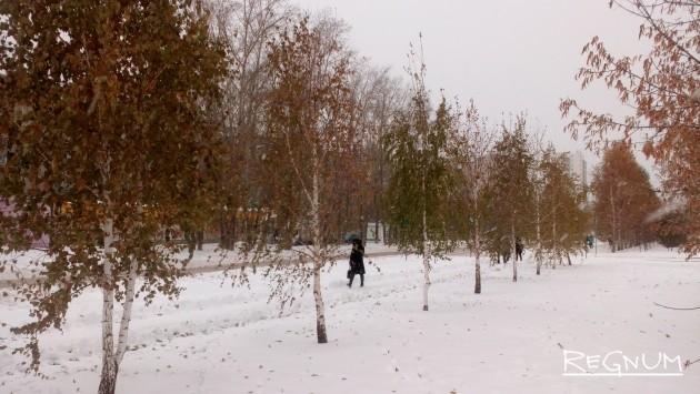 Деревья и кустарники новосибирска