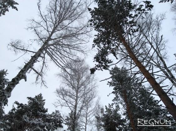 Энергетики СГК вызвались спасти от замерзания жителей Рубцовска