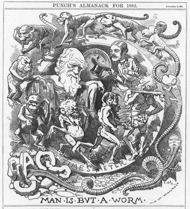 Карикатура на теорию эволюции Дарвина в журнале «Панч». 1882