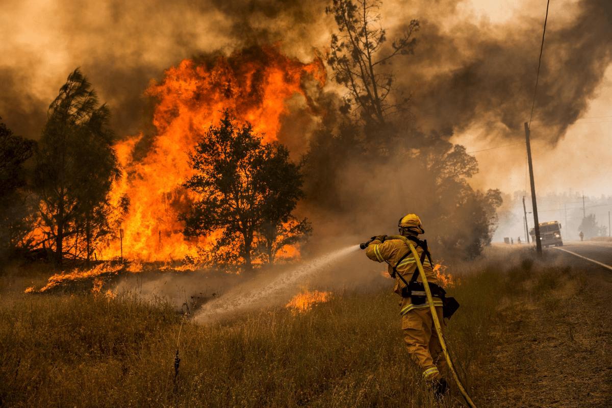 тушение лесного пожара картинки присутствие хэштегов