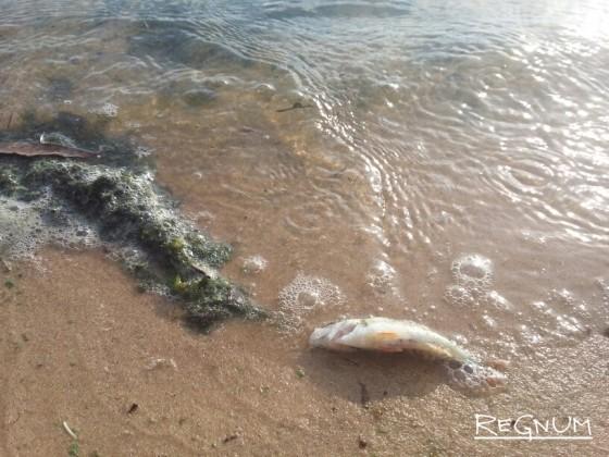 Волга страдает из-за «самого грязного» водохранилища страны