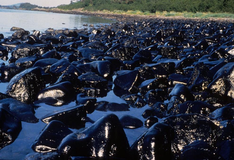 Загрязненные при разливе нефти камни