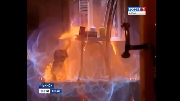 Бийские учёные представят прибор, который сможет предотвращать взрывы