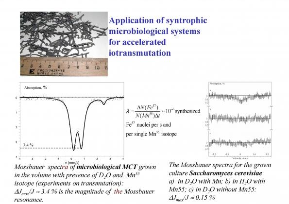 Рис. 11. Ускорение процесса получения изотопа железо-57 с помощью синтрофных микробных ассоциаций (слева) в сравнении с микробными монокультурами (справа)