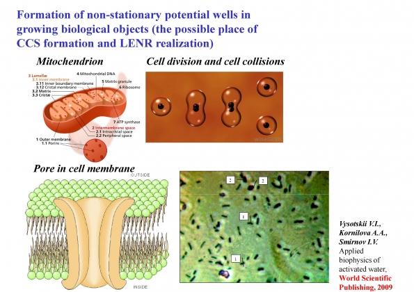 Рис. 27. Места возникновения нестационарных ям в клеточных структурах (митохондрии, поры в мембранах) и между клетками в процессе деления и между микробами ассоциации
