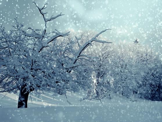 Резкое потепление принесет в Воронеж новые снегопады