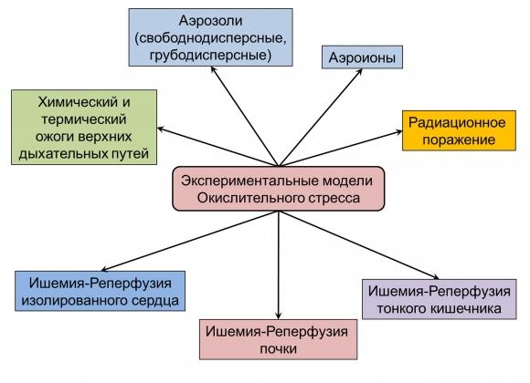 Рис. 3. Модели на животных для выявления эффективности экзогенных пероксиредоксинов при лечении разных патологий